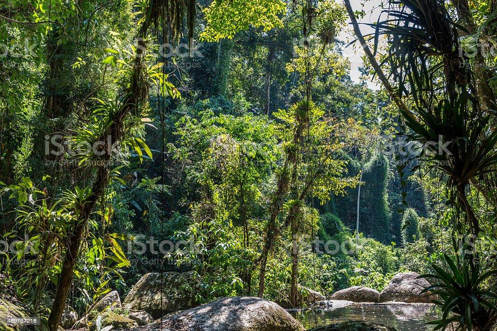 Atlantic rain forest stock photo