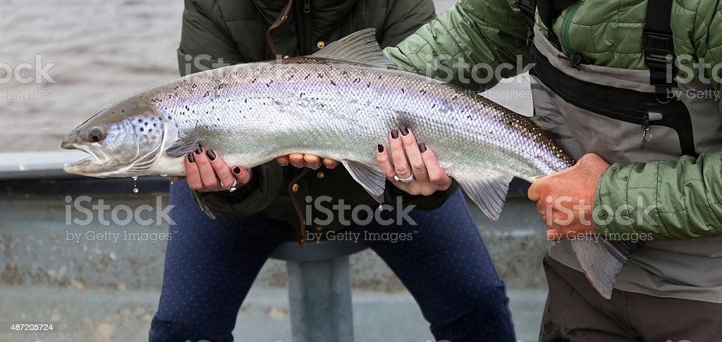 Atlantic Salmon Caught by Lady Angler stock photo