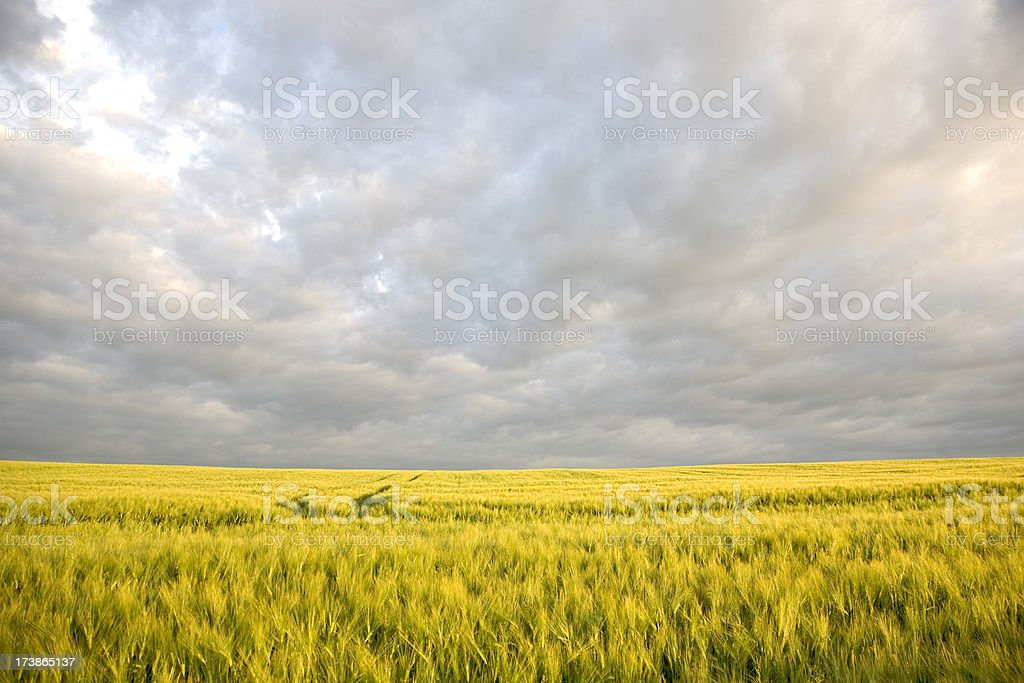 Atmospheric clouds royalty-free stock photo