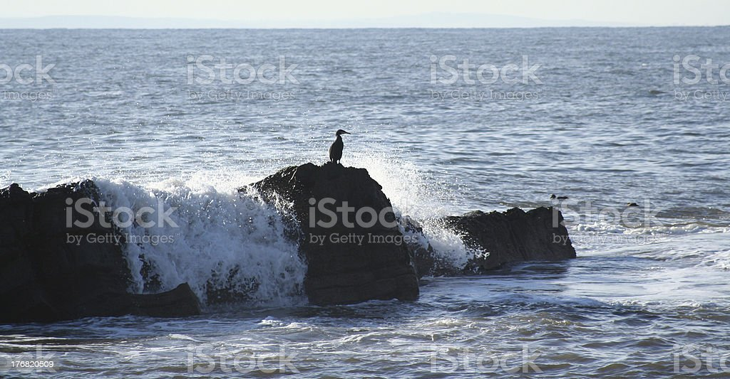 Atop a rock royalty-free stock photo