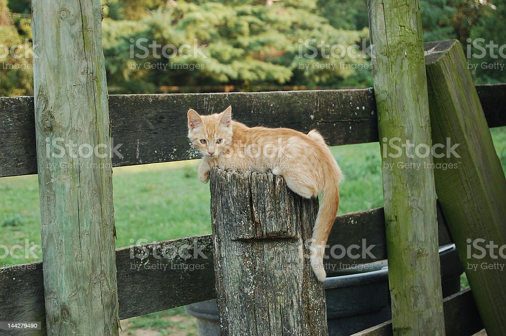 Atop the Fence Post stock photo