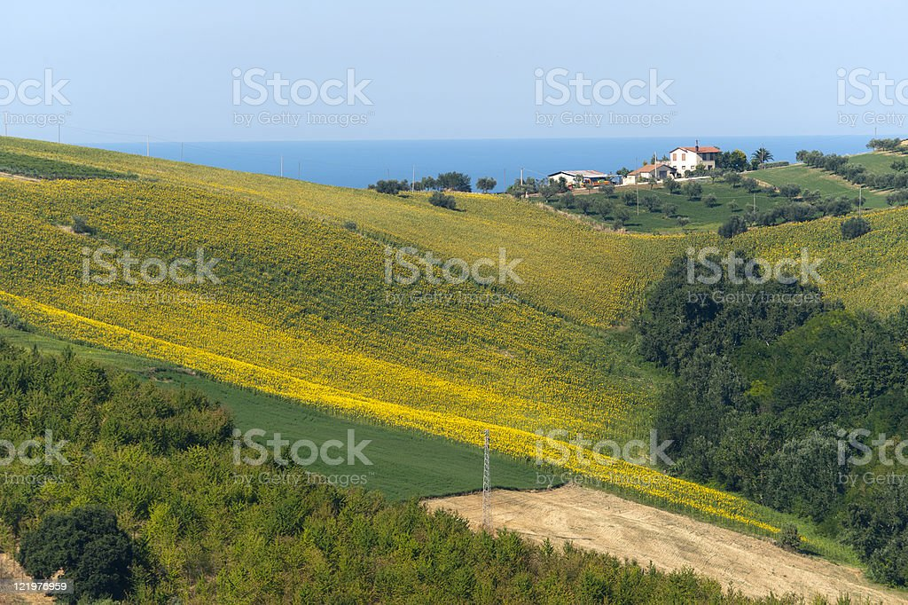 Atri Natural Park (Teramo, Abruzzi, Italy), landscape at summer royalty-free stock photo