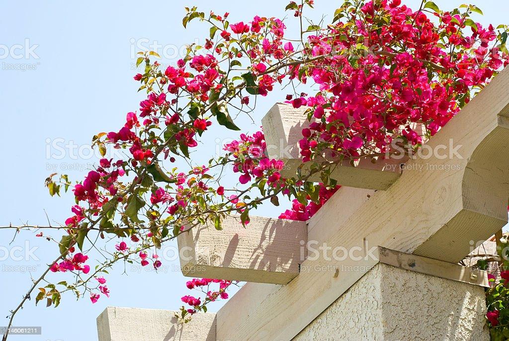 фото цветок атриум