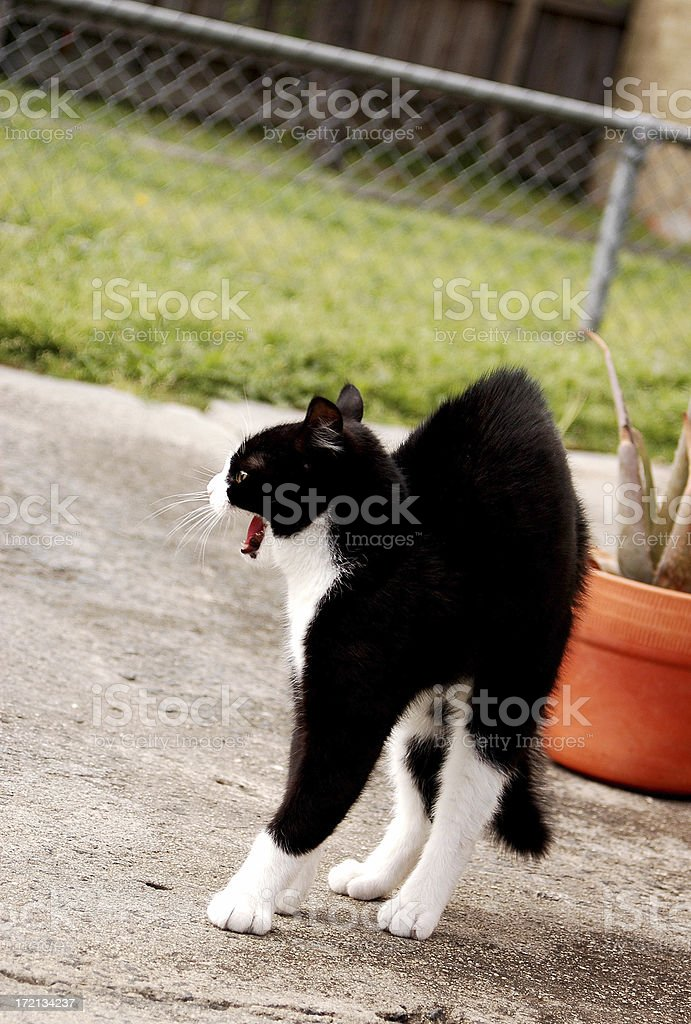 attack cat stock photo