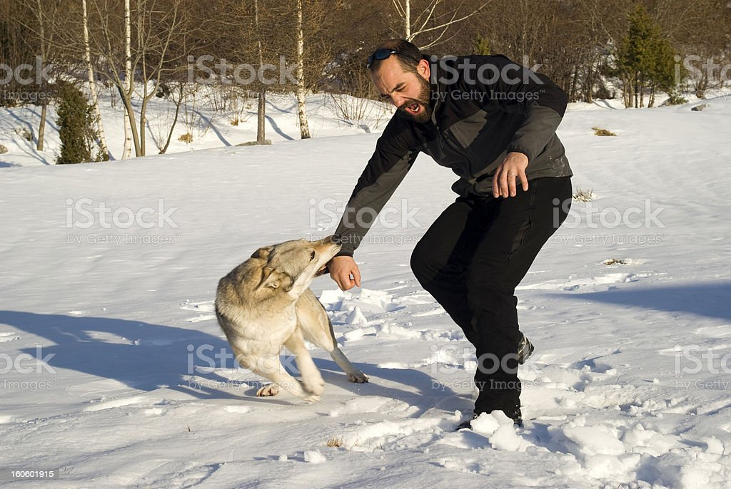 Attack dog stock photo