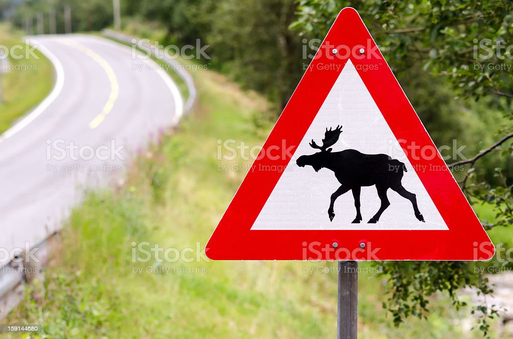 attention elks crossing royalty-free stock photo