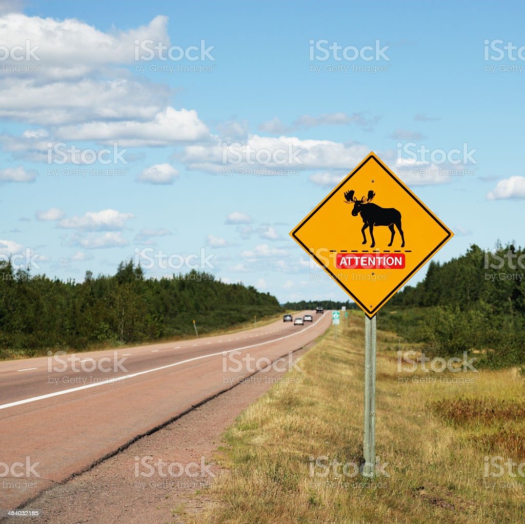 Attention Moose Crossing Road Sign stock photo