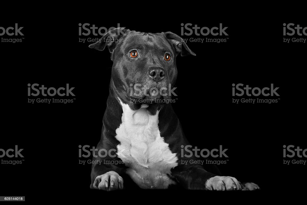 attentive dog on black stock photo