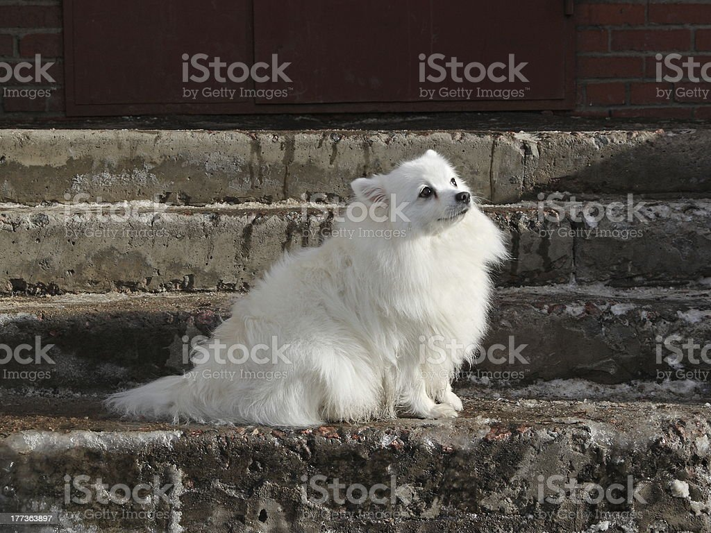 Attentive dog stock photo