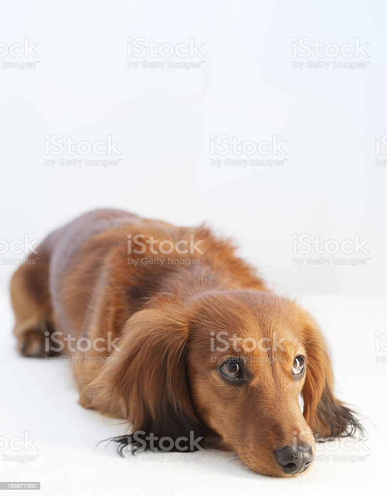 Attentive Young dog stock photo