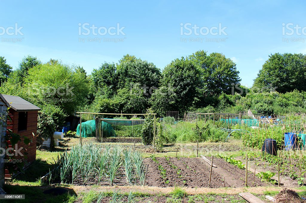 Attractive allotment vegetable garden with rows of plants, plots, shed royalty-free stock photo