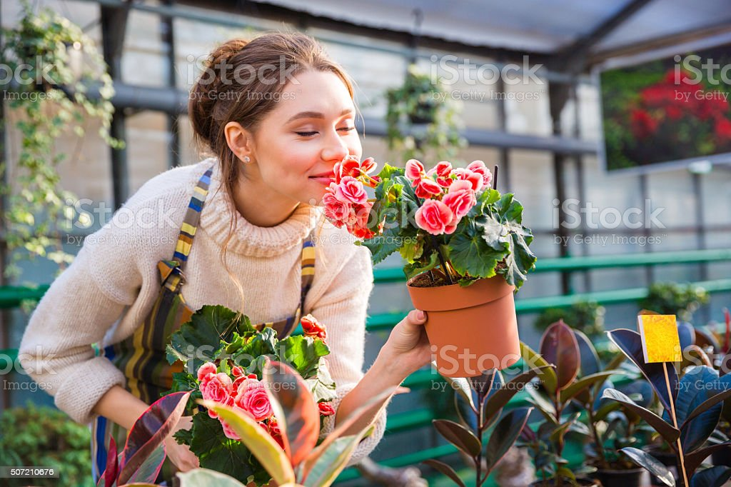 Attractive cute woman gardener smelling pink flowers in pot stock photo