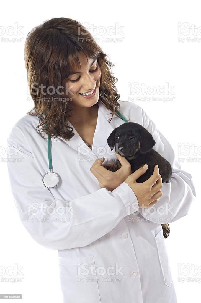 Attractive lady veterinarian royalty-free stock photo