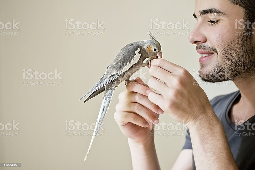 Attractive man playing with his parrot indoors stock photo