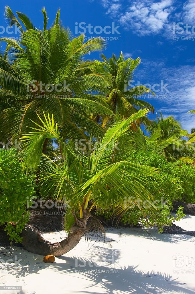 Attractive palmtrees royalty-free stock photo