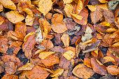 atumn leaves on ground