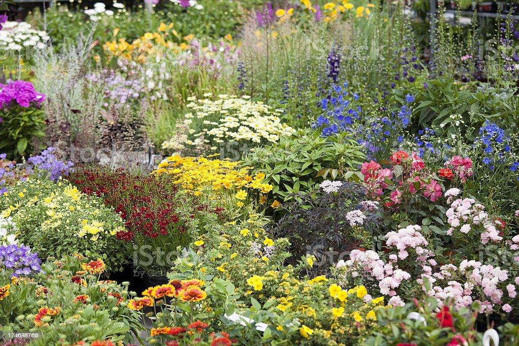 Atwater Farmers Market Outdoor Flower Garden Center, Montreal Canada stock photo
