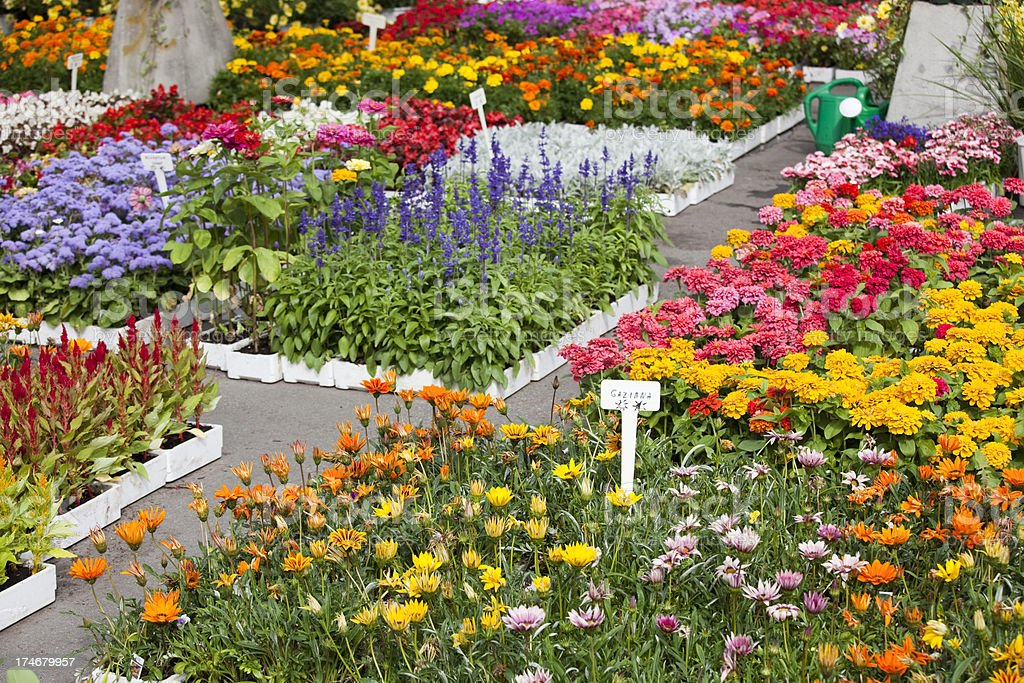 Atwater Market with Outdoor Fresh Flowers for Spring Planting stock photo