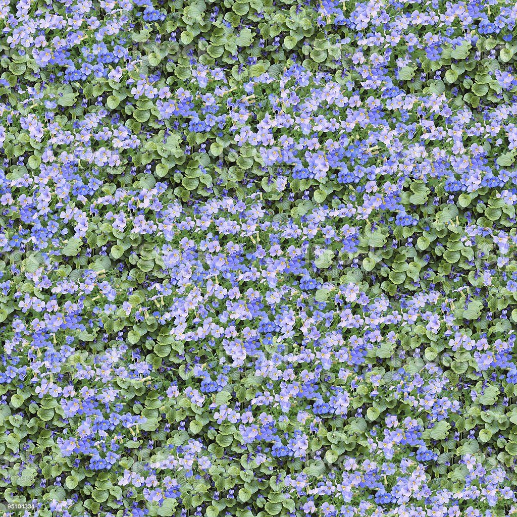 Aubrieta and violet seamless composable pattern royalty-free stock photo