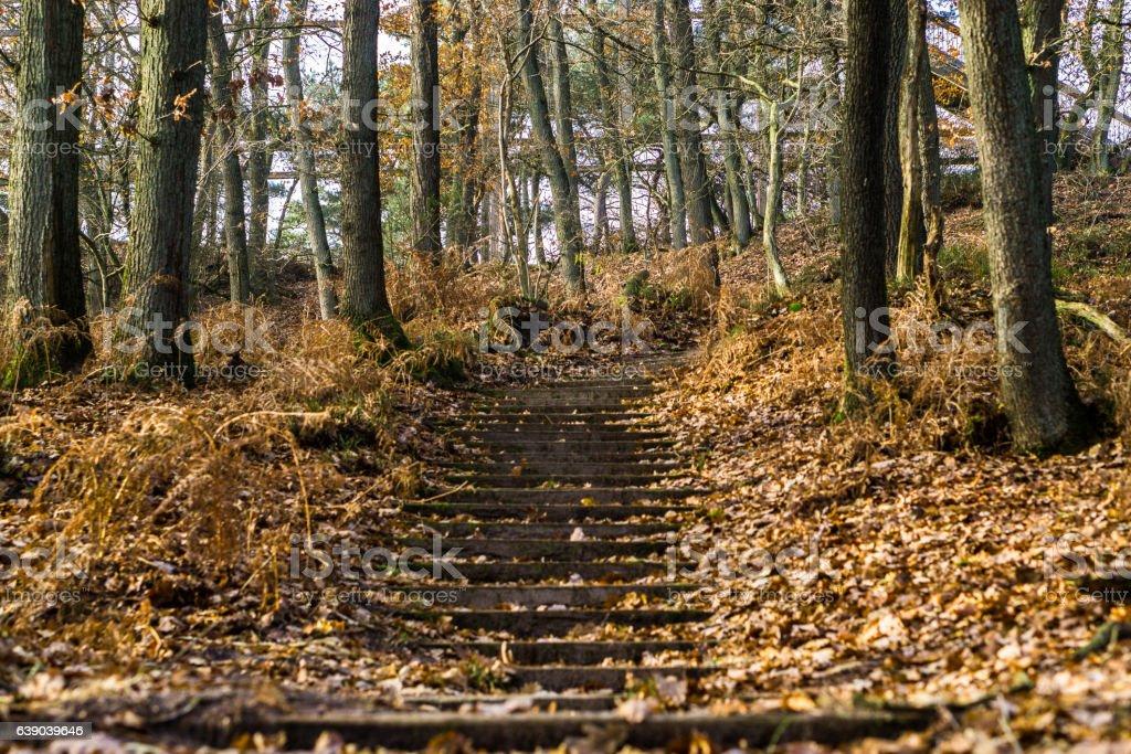Auf dem Wanderweg stock photo