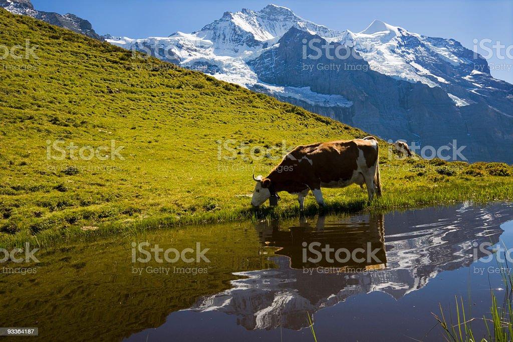 Auf der Alp stock photo