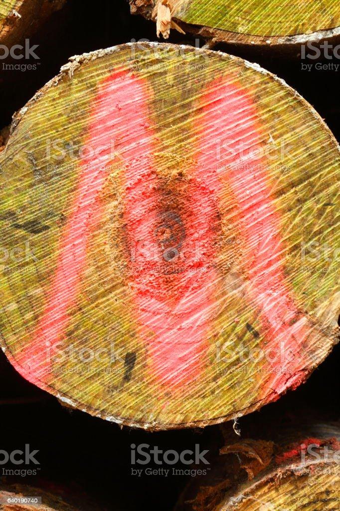 aufgestapelter mit einem roten M markierter Baumstamm stock photo
