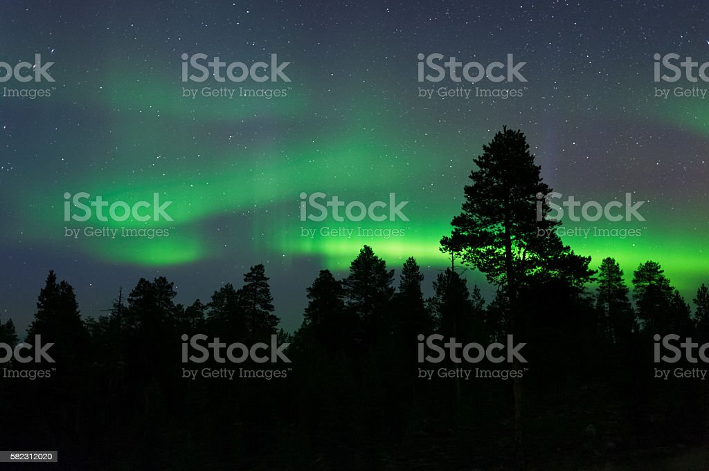 Aurora Borealis above boreal forest stock photo