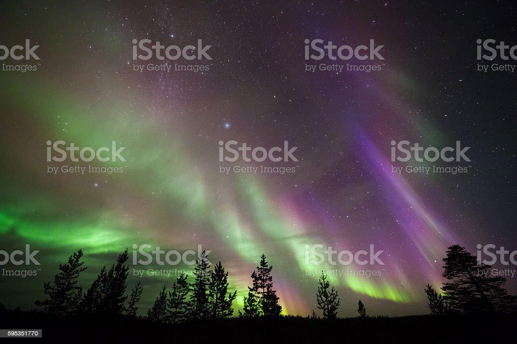 Aurora Borealis above boreal forest stock photo