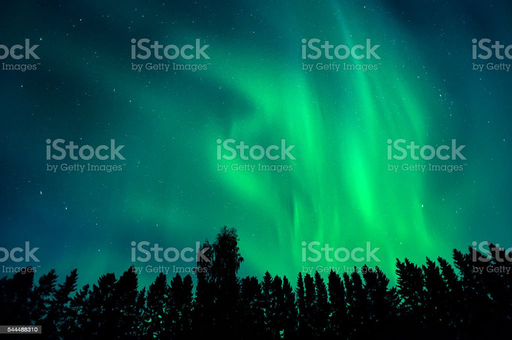 Aurora borealis above treetops stock photo