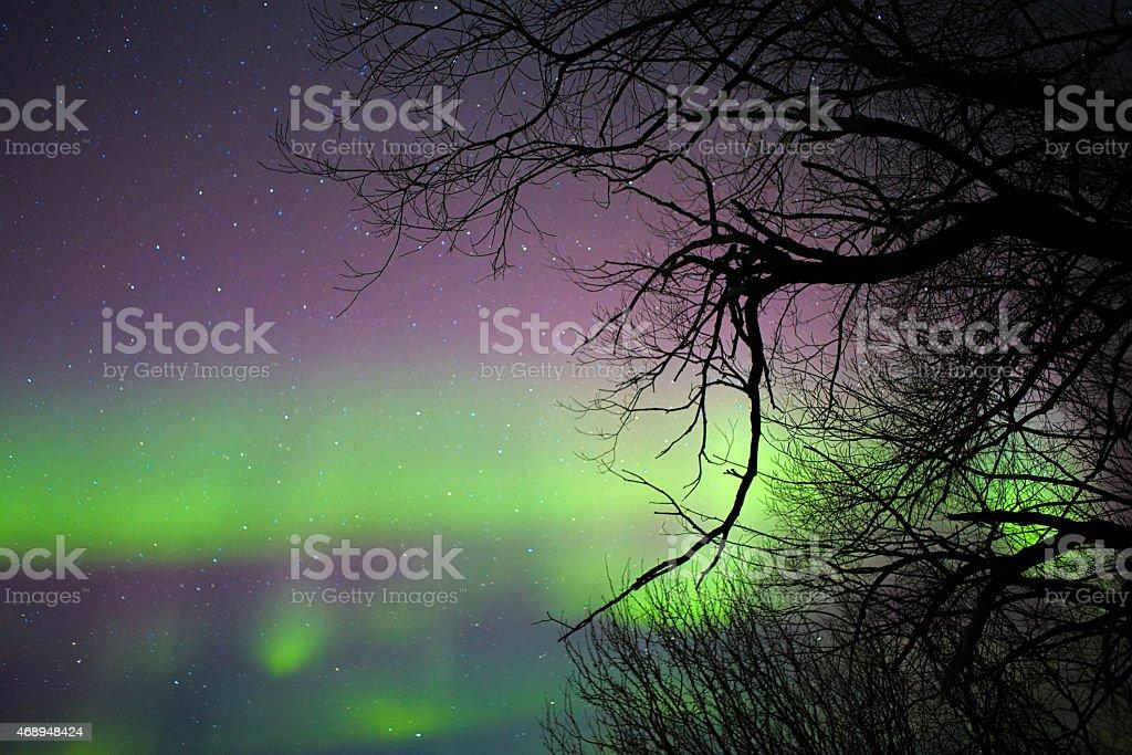 Aurora borealis behind a bare tree stock photo