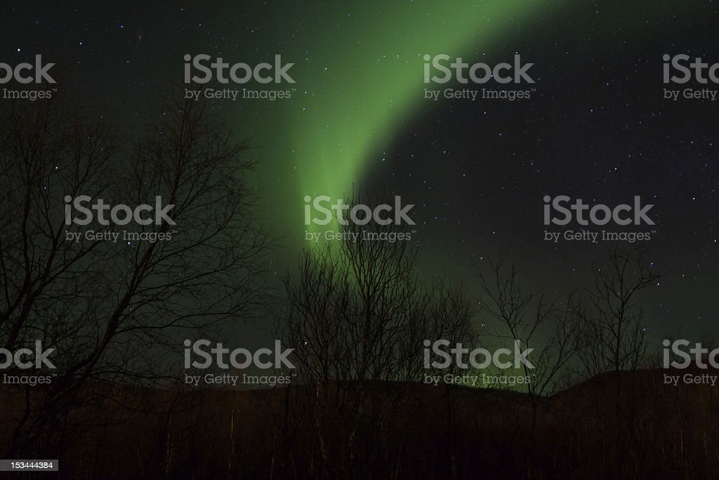 Aurora Borealis (Northern Lights) behind trees royalty-free stock photo