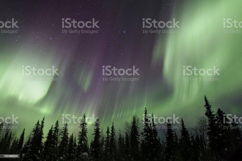 Aurora Borealis over Forest royalty-free stock photo
