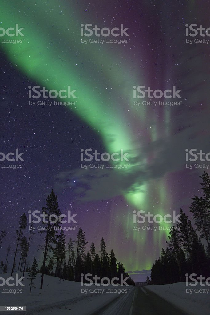 Aurora Borealis over pine trees in Arctic Sweden royalty-free stock photo