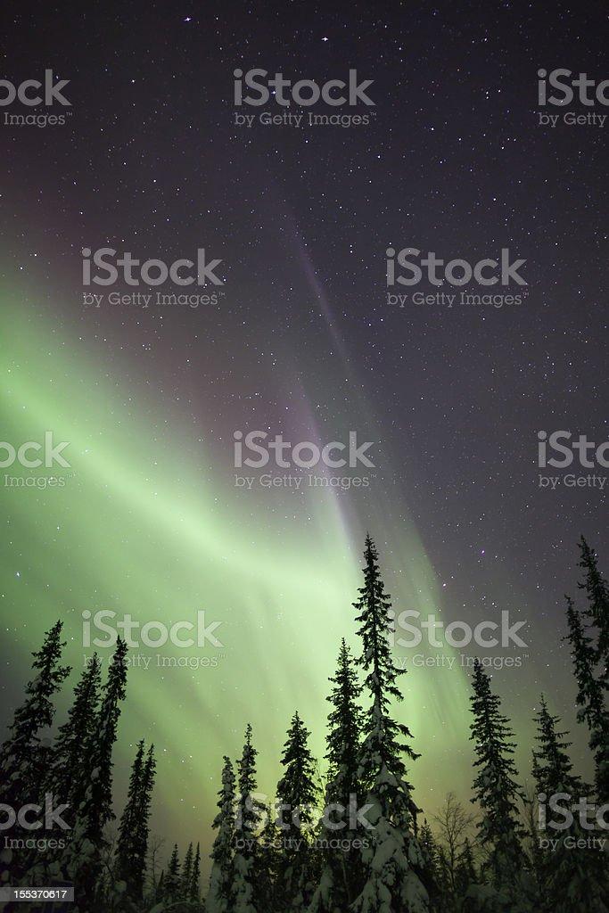 Aurora Borealis over Snow and Trees royalty-free stock photo