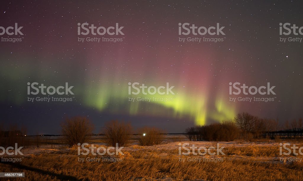Aurora Borealis over trees stock photo