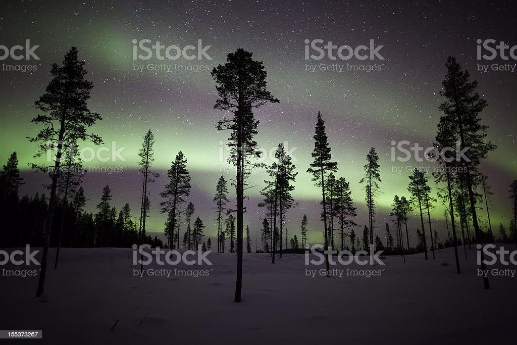 Aurora Borealis Stripes over Trees stock photo