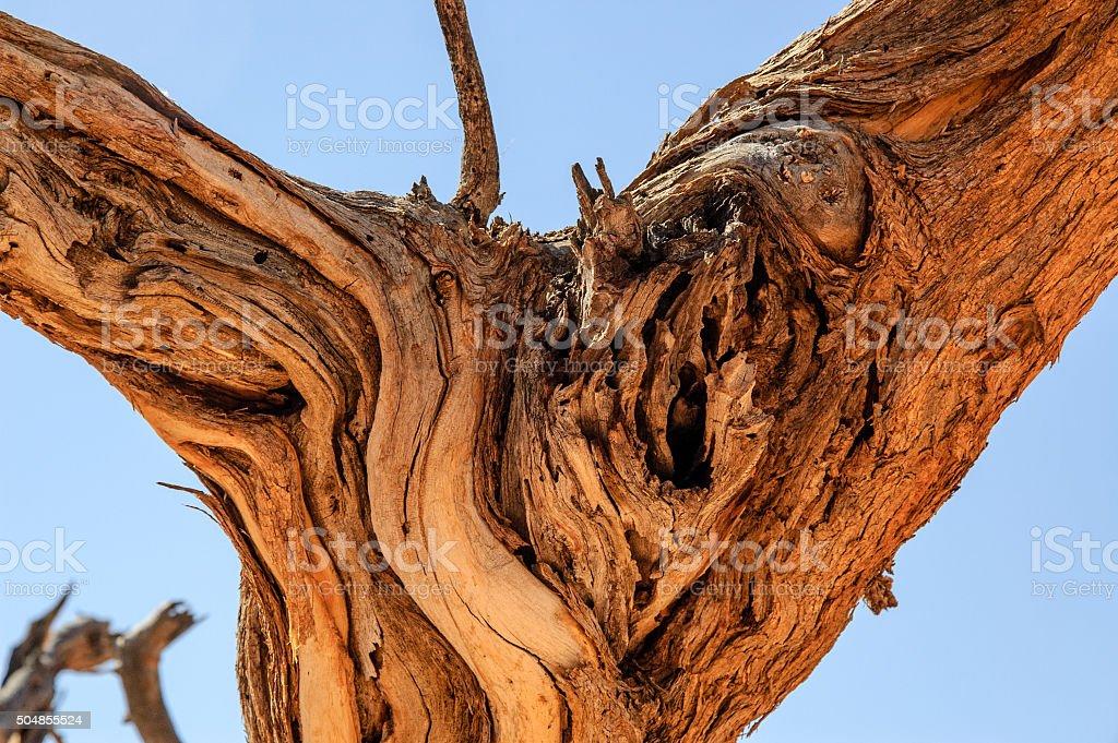 Ausgetrockneter Baumstamm stock photo