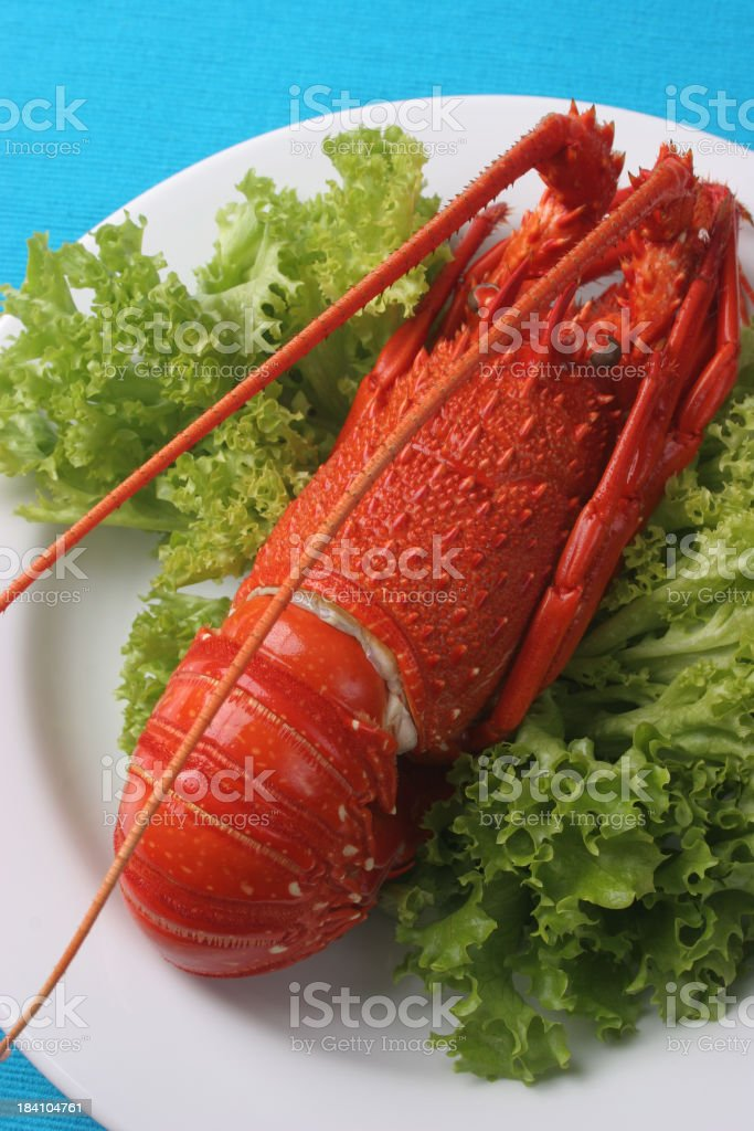 Aussie Crayfish royalty-free stock photo