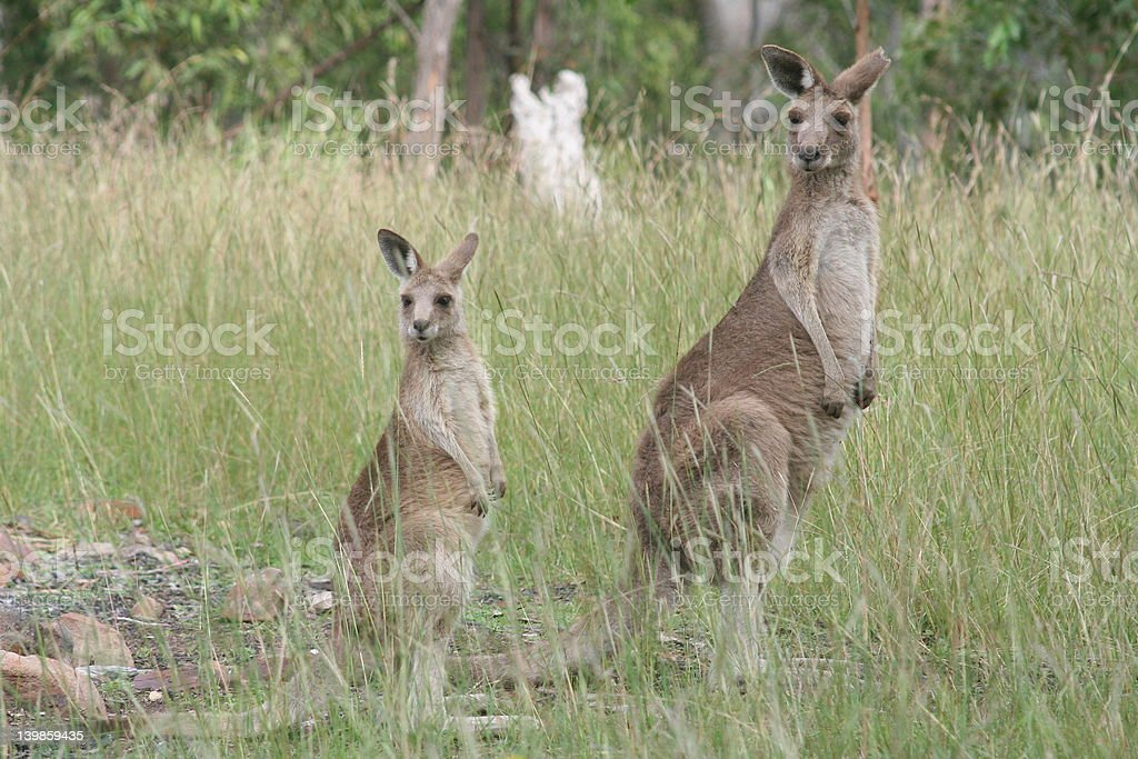 Aussie Icons royalty-free stock photo