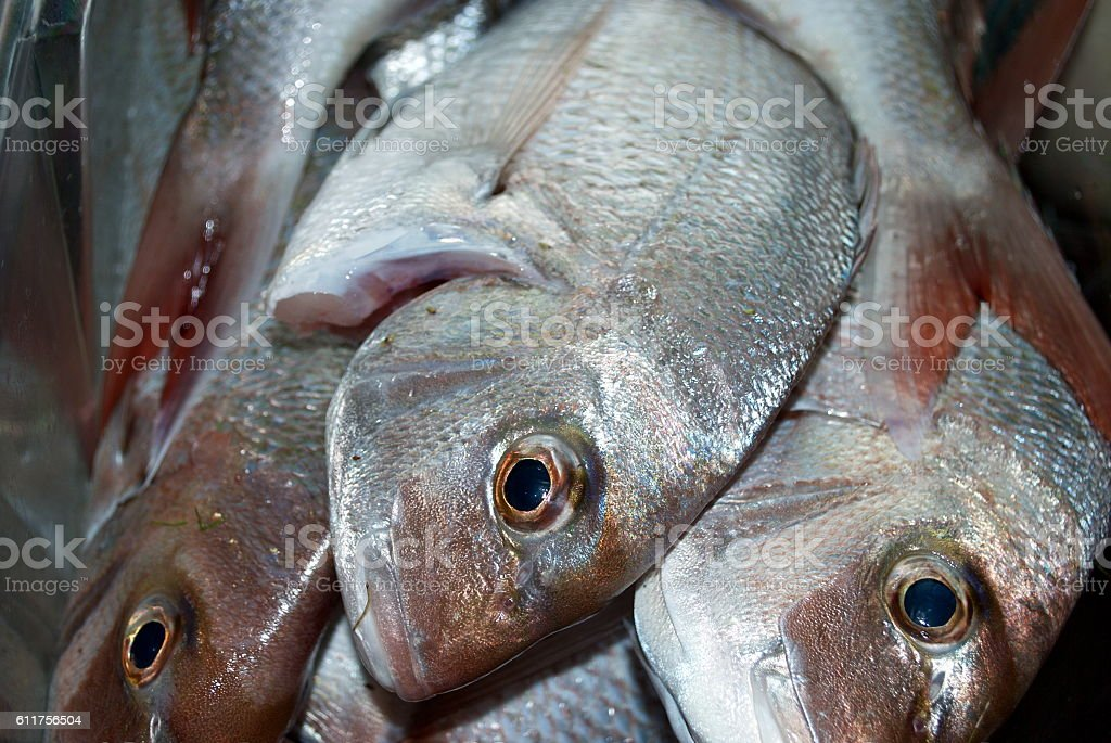 Australasian Snapper or Silver Seabream stock photo