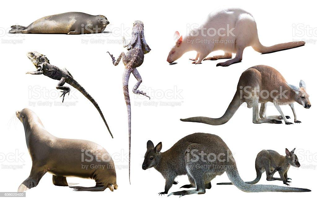 australia animals isolated stock photo