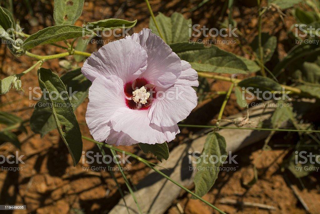 Australia Botany stock photo