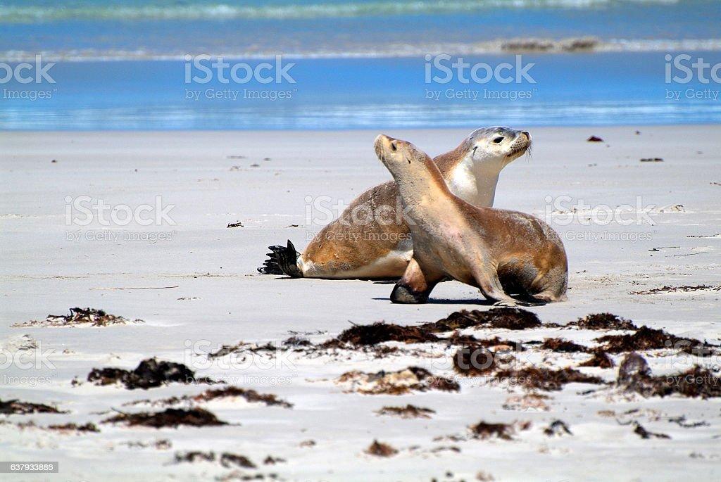 Australia - Kangaroo Island stock photo