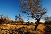 Australia Landscape : Native plants and trees in Australia Outback