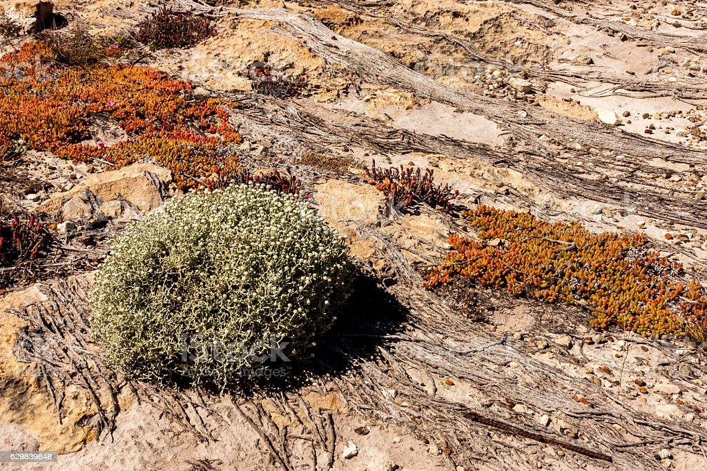 Australia. Outback. stock photo