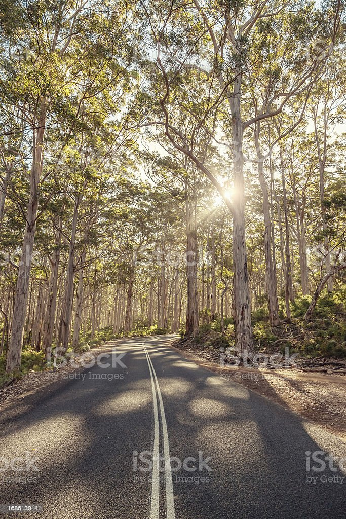 Australia Road through Eucalyptus Forest stock photo