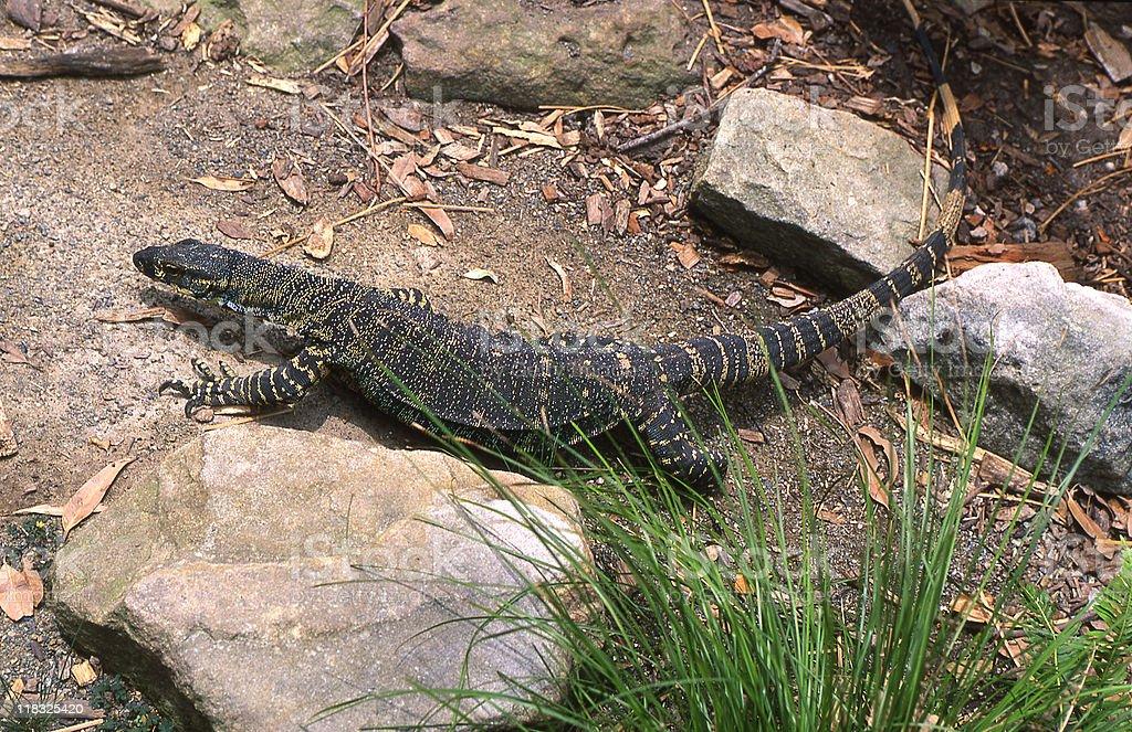 Australia, Zoology stock photo