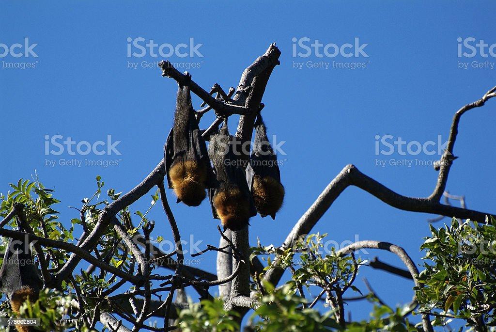 Australia, Zoology royalty-free stock photo
