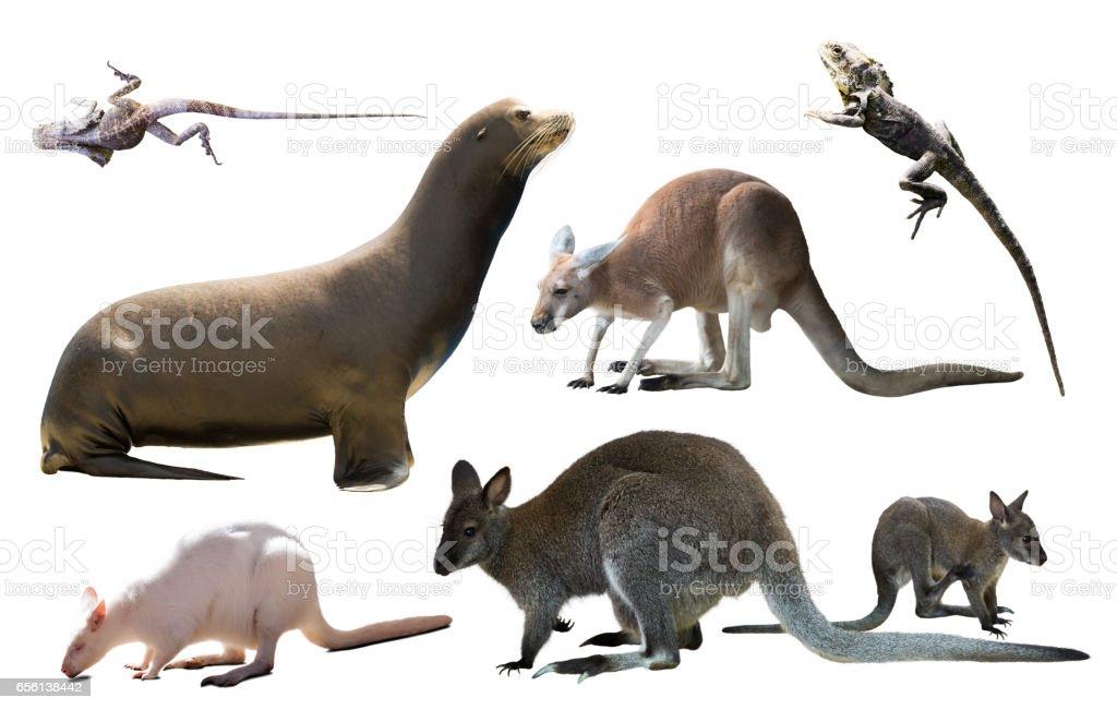 australian animals isolated stock photo
