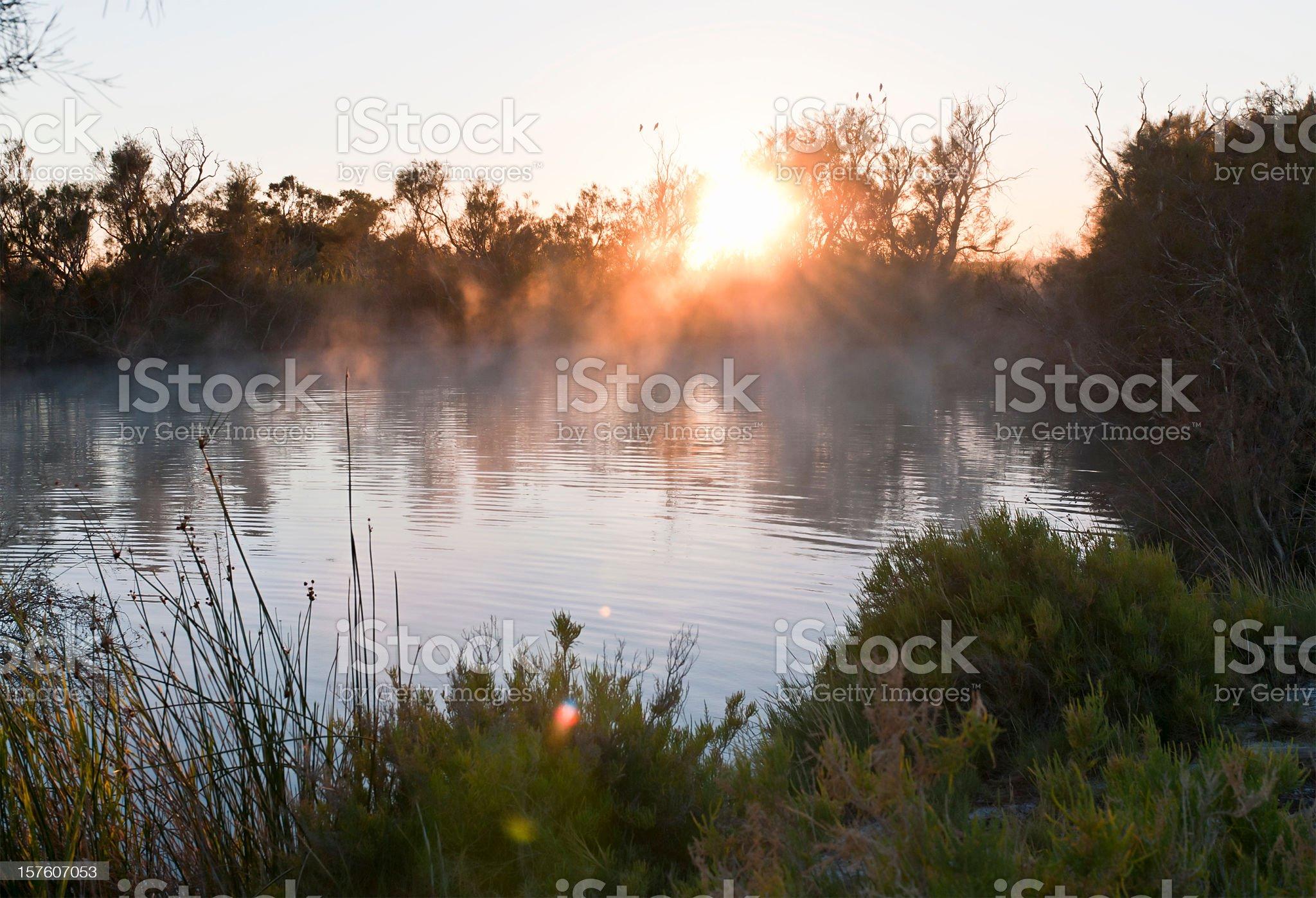 Australian Billabong at Dawn royalty-free stock photo